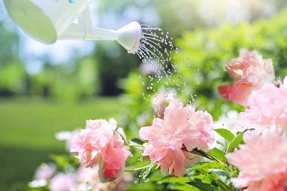 可愛い花々へ水を与えて生き生きと