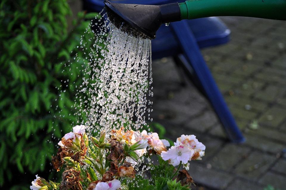弱った草花にたっぷりと水やり