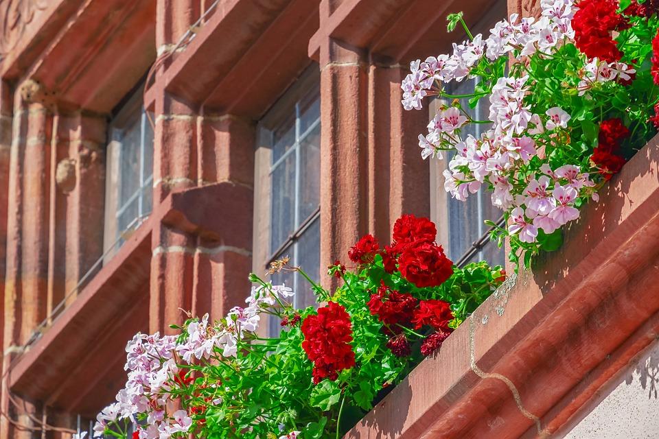 ゼラニウムで鮮やかに窓辺を飾るイギリスの街並み