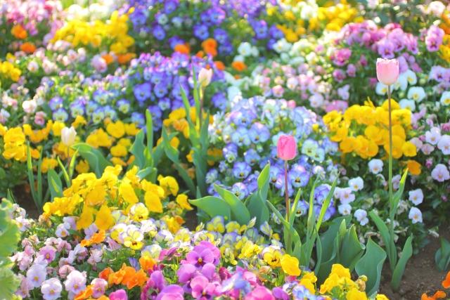 春の花で溢れる庭