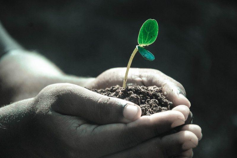 土と植物の芽を手で優しくすくう